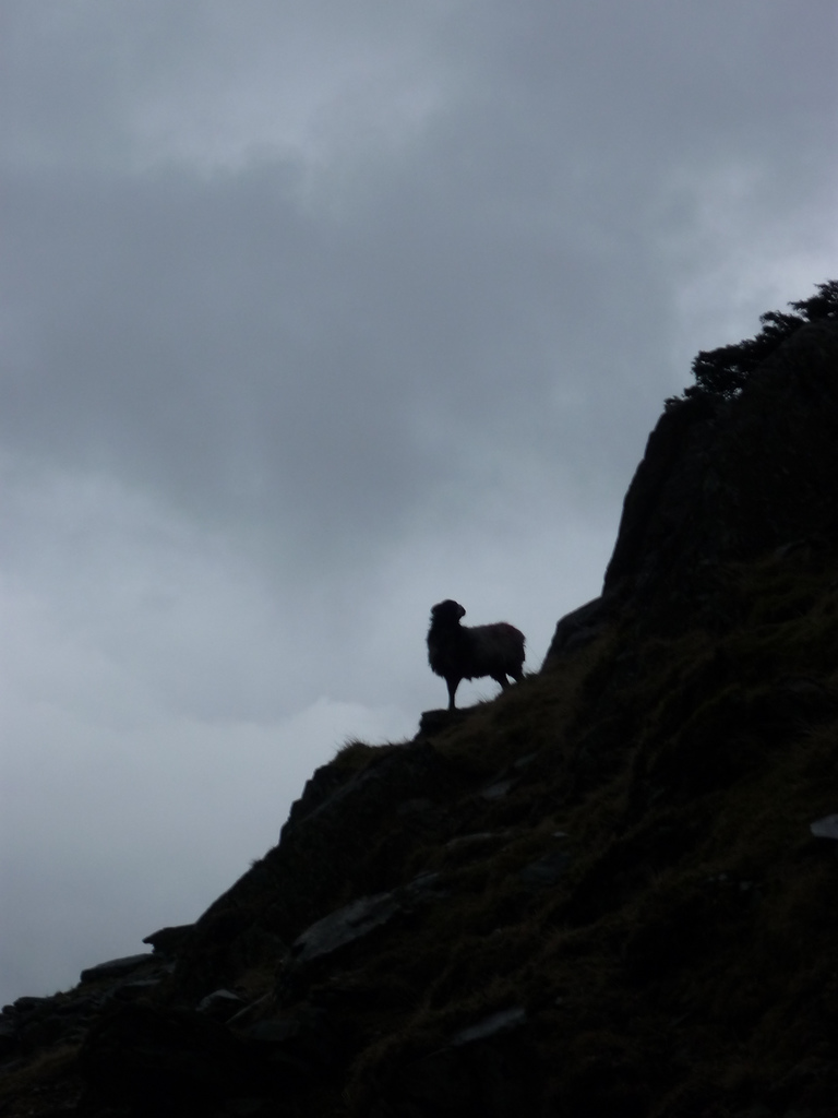 Lone Sheep by James Qualtrough