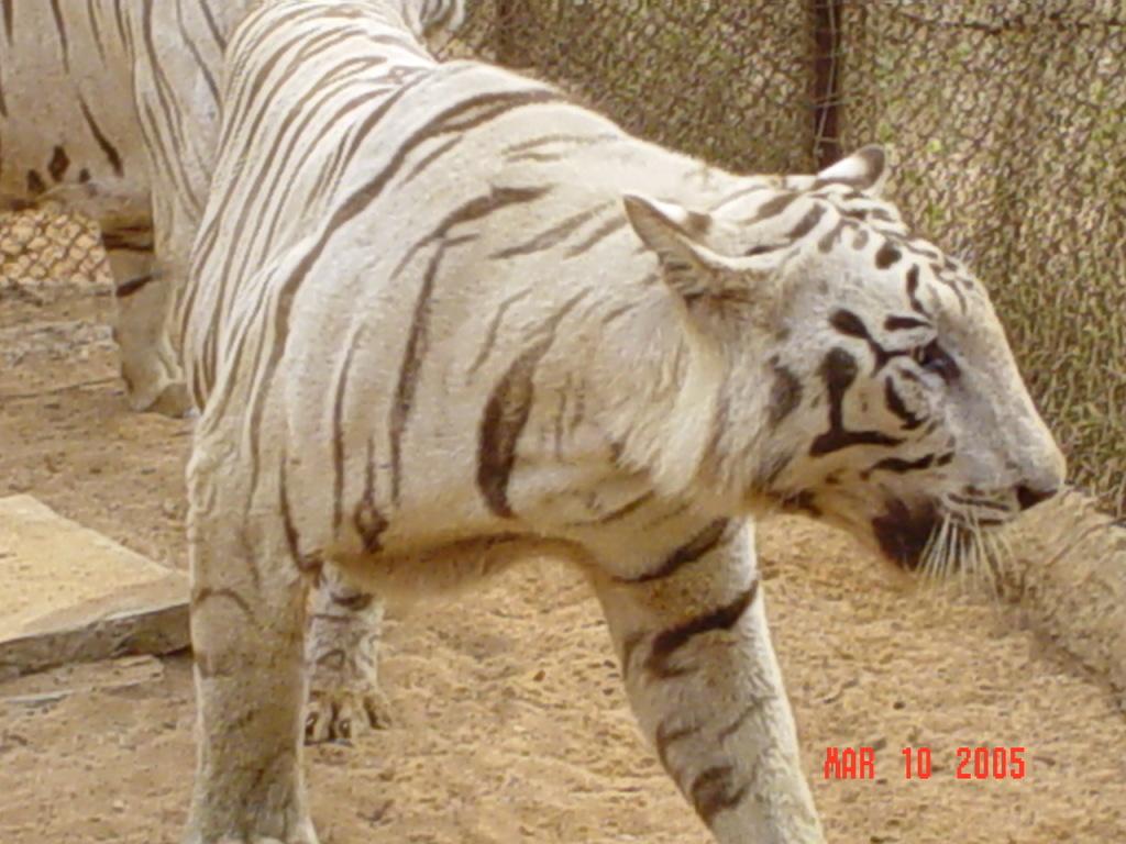 050309 Orissa Zoo Park - India 2005 (12)